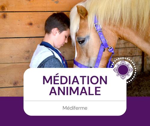 Médiation animale - Médiferme - Matéis O'bien-être